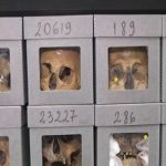 Crânes Algérie